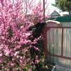 Александр, 39, г.Хабаровск